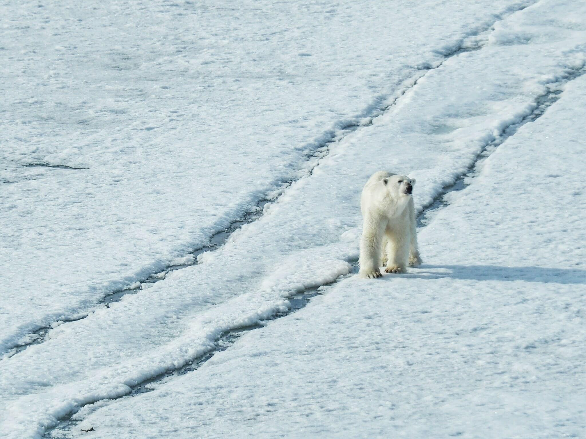 สวาลบาร์ด The Last Arctic Frontier